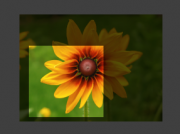Previewback flower theme.png